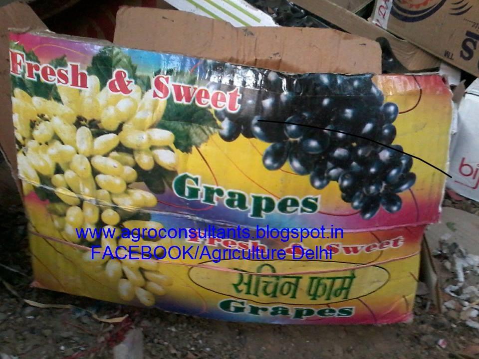 Somesh Jha: Fruits फल Grapes Papaya Ber Guava Amrood dryfruits