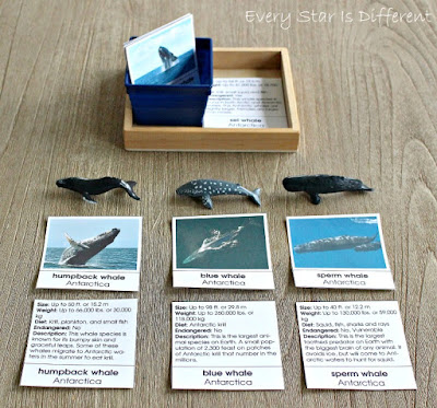 Whales of Antarctica Picture and Description Cards
