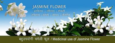 बहुउपयोगी चमेली फूल Chamelee - Jasmine Flower in Hindi