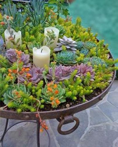 barbeque grill atau wajan pemanggang barbeque bisa dimanfaatkan jadi pot succulent,