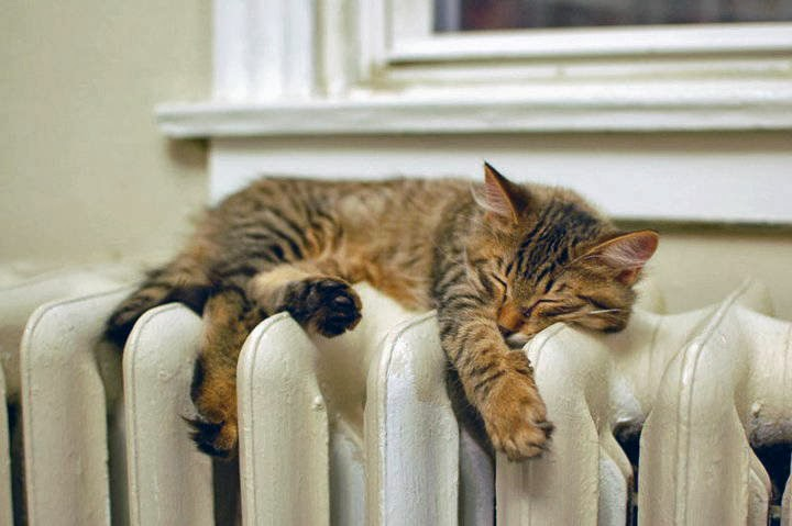 Funny cats - part 88 (40 pics + 10 gifs), kitten sleeps on the heater