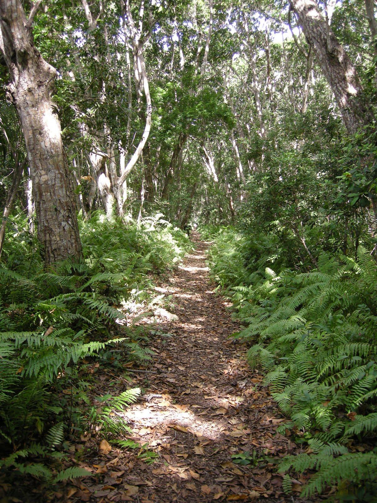 Women Travelling Alone Jozani Forest Zanzibar