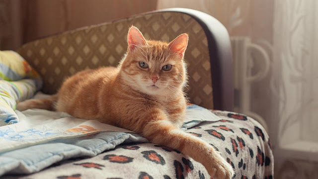 Жизнь найденной в Москве у тела матери годовалой девочки спас кот