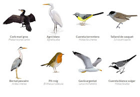 Winged animals Voice Amazing Technology Touch Anywhere and fun parcels off