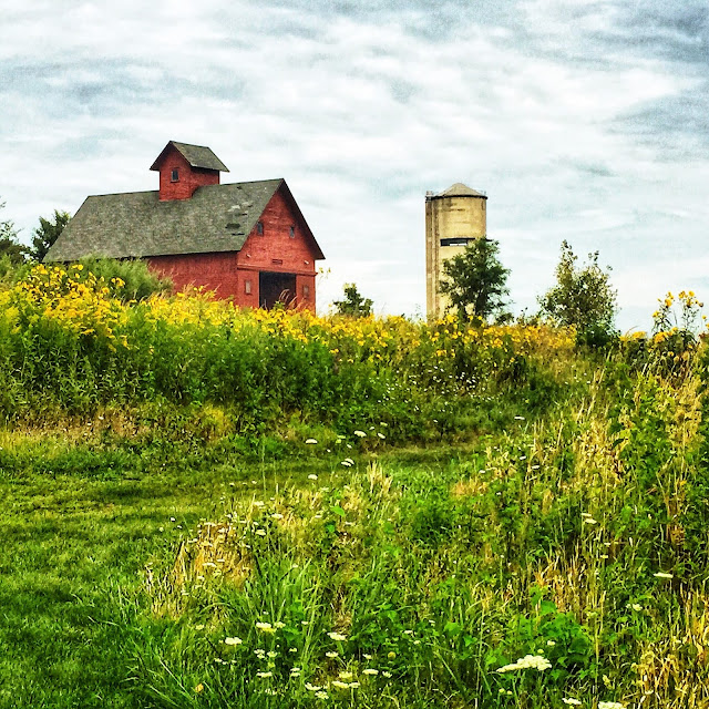 Summer prairie days at Peck Farm in Geneva, IL