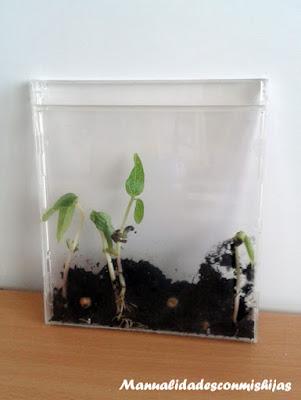Creciendo plantas en CDS