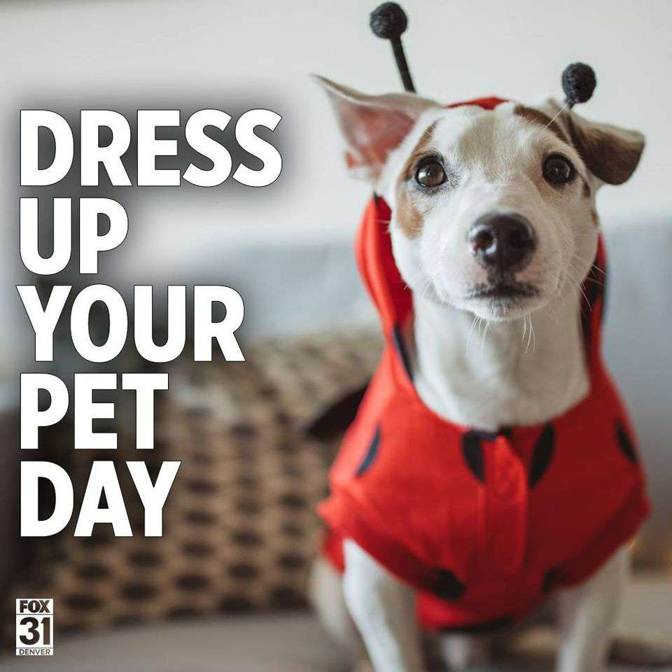 National Dress Up Your Pet Day Wishes for Whatsapp