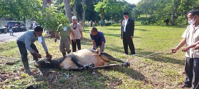 Idul Adha 1442H, PT PIM Krueng Geukueh Salurkan 21 Sapi dan 2 Kambing Untuk Masyarakat