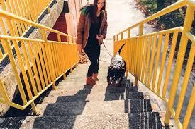 escadas entre andares para cães