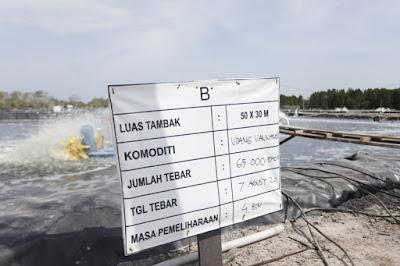 Potensi Budidaya Udang Vaname Sangat Besar di Riau, Begini Penjelasannya