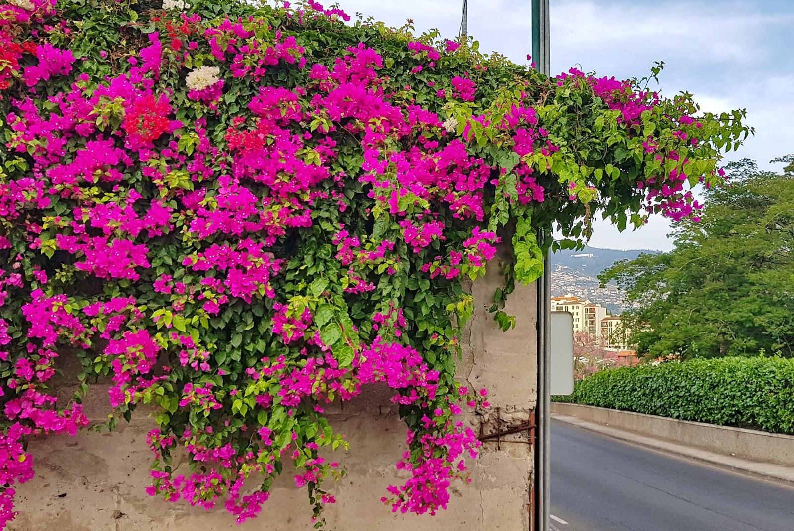 parede em flor