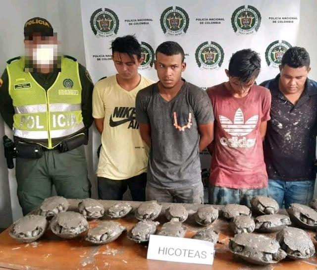 Los pusieron presos por vender 22 hicoteas