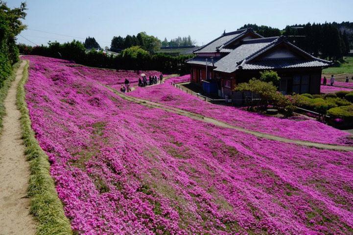 Marido cariñoso planta un campo de perfumadas flores para que su pareja ciega sonría cada día