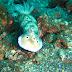 Amed, Hewan Mikro Bawah Laut dan Gunung Agung Yang Agung