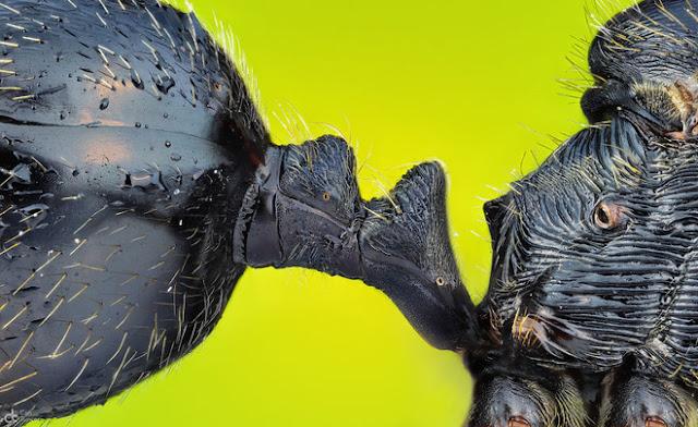Khớp nối bụng và ngực của một con kiến, tác phẩm đến từ Izmir, đạt giải ảnh độc đáo