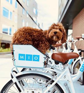 Dog sitting in a basket on a Mio bike