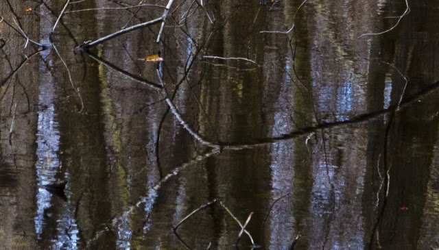 Reflections in a vernal pool, Menunkatuck Trail