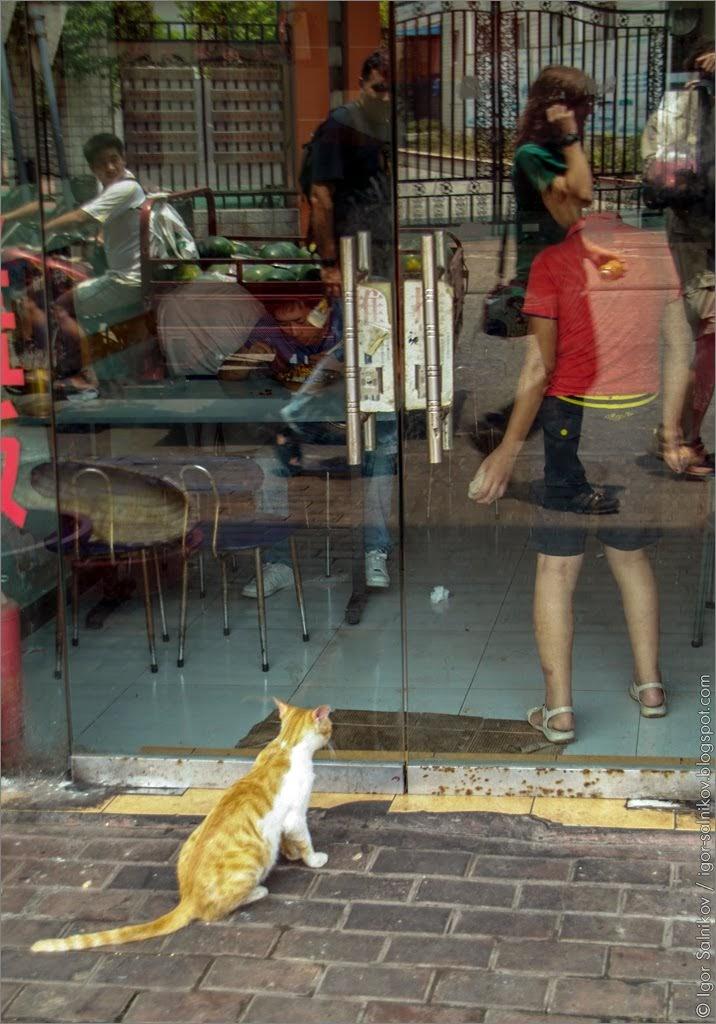 Ухань, Wuhan, China, Sina, Китай, кот, cat