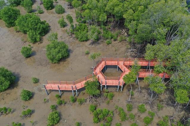 KKP Segera Bangun 4 Pusat Restorasi dan Pengembangan Ekosistem Pesisir
