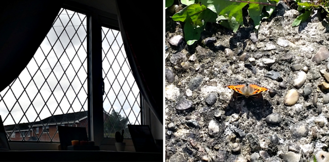 A look out of my living room window and a black and orange butterfly