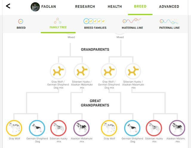 wolfdog family tree, wolfdog lineage