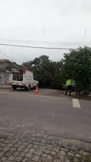 Em Guarabira arvore tomba  e causa prejuízo para dono de veiculo parado no local