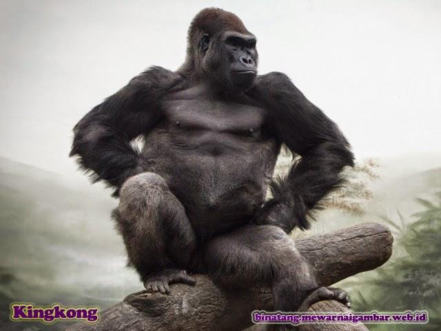 gambar binatang kingkong
