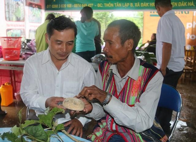 Ông Nay Bui với bánh men làm rượu truyền thống