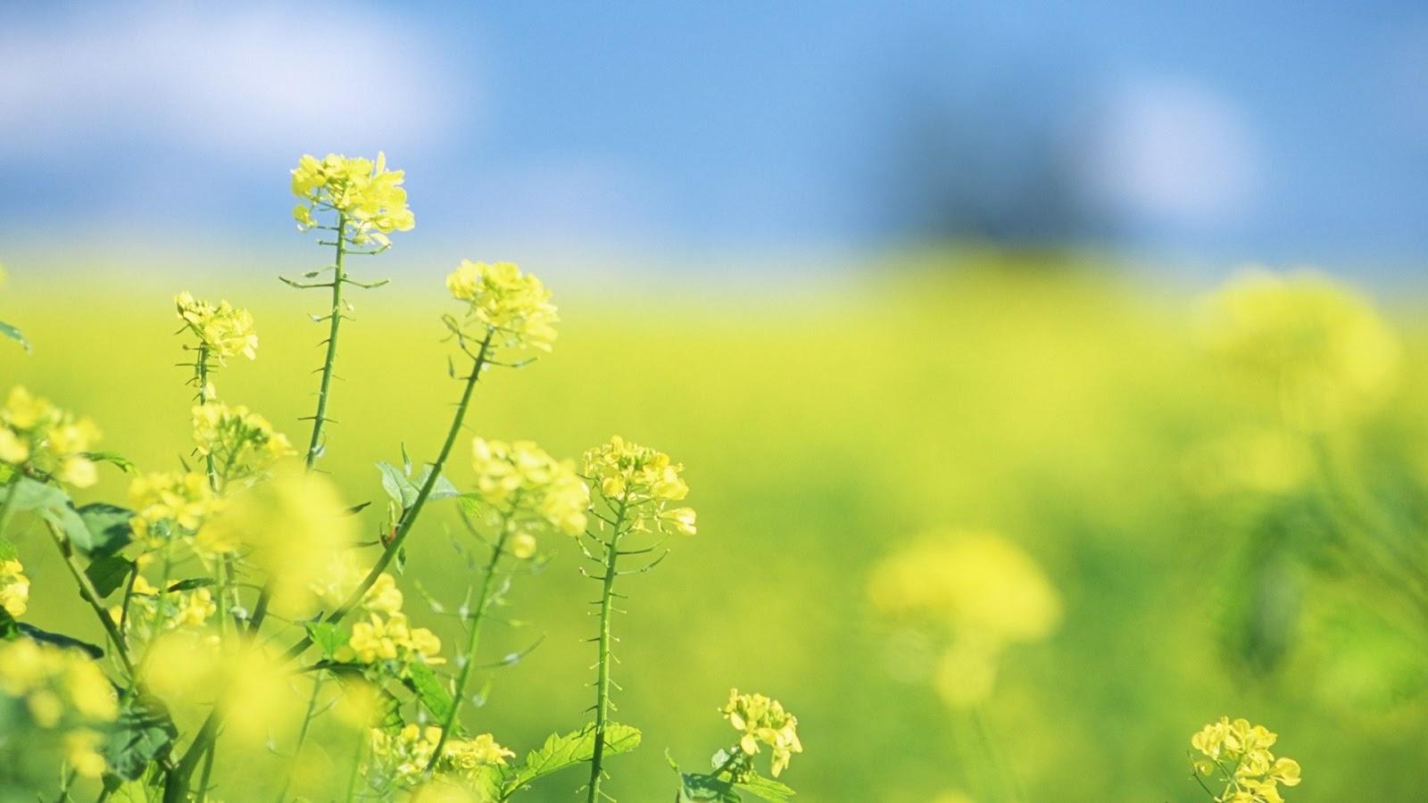Hình ảnh hoa dại đẹp nhất, bông hoa dại tuyệt đẹp