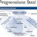 Tại sao cần bổ sung nội tiết tố từ Pregnenolone