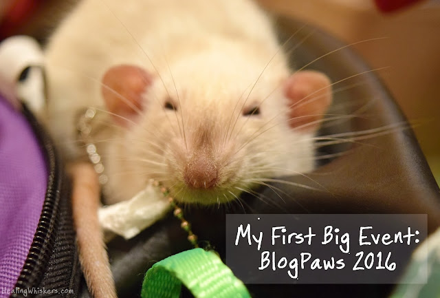 My First Big Event: BlogPaws 2016