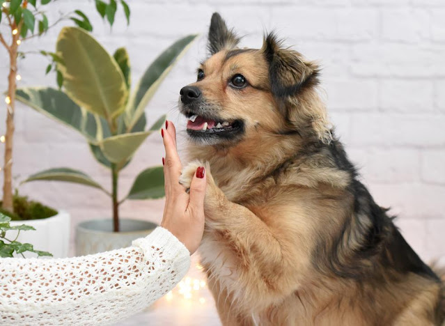 hi5 with dog