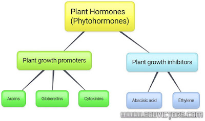 CBSE Class 10 - Biology - Study Notes about Plant Growth Hormones (Phytohormones) (#cbseNotes)