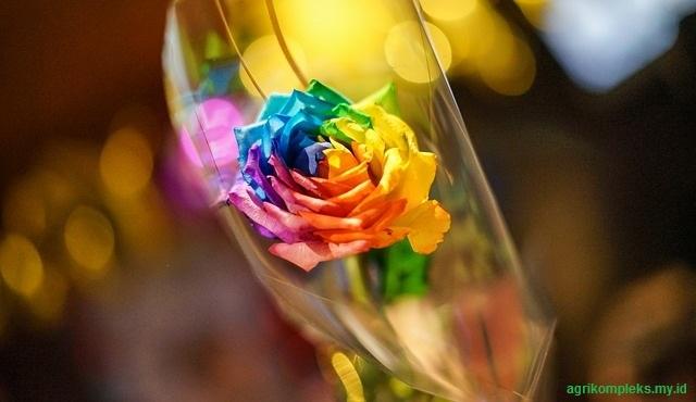 Menyilangkan bunga mawar menjadi warna bunga yang berbeda