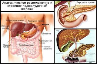 Печень, Желчный пузырь и Поджелудочная железа