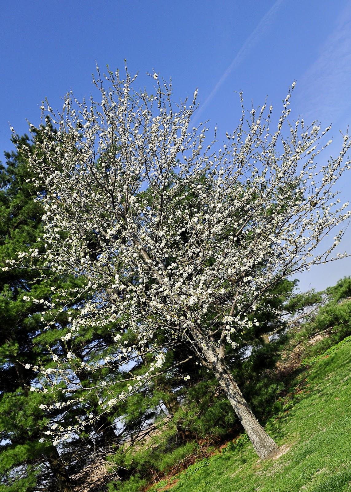 This Farm Family's Life: The Marshmallow Tree...