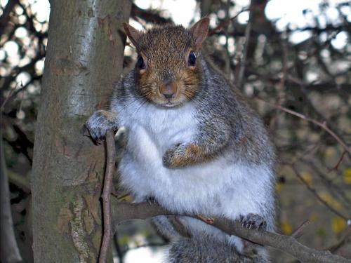 Funny squirrels wallpaper for widescreen funny animal - Funny squirrel backgrounds ...
