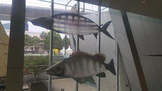 BIG Bone Fish & BIG Papuan Black Bass. 2006 Commonwealth Games Fish. 72 BIG Fish of Victoria