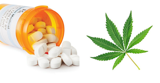 Marijuana use is associated with an increased risk of prescription opioid misuse and use disorders