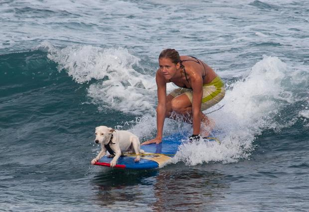 Ngộ nghĩnh với cuộc thi lướt sóng dành cho cún cưng