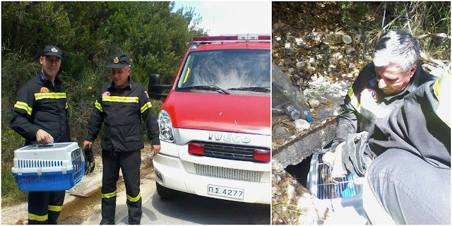 Ηγουμενίτσα: Νέα επιχείρηση της Πυροσβεστικής για τον απεγκλωβισμό γάτα από το ίδιο φρεάτιο στο Λαδοχώρι (+ΦΩΤΟ)