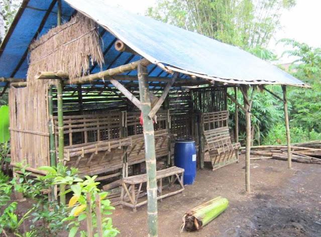 Contoh Gambar Dinding Kandang Kambing dari Bambu Sederhana
