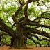 Kisah Teladan, Petuah Pohon Tua yang menggegerkan Dunia