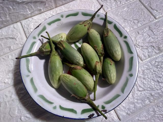 jenis-jenis terung