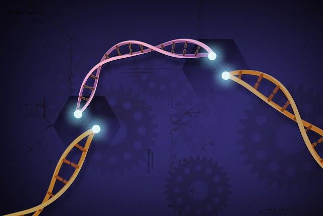 CIENTISTAS INVESTIGAM A EFICÁCIA DO USO DE GENES PARA TRATAMENTO CONTRA O CÂNCER