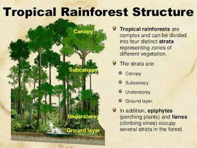 Struktur Vertikal Hutan Hujan Tropis