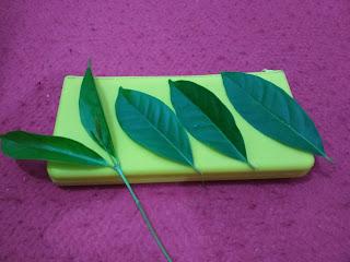 5 khasiat daun salam