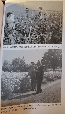 Top: Gösta together with Stig Blixt and his  family in maize field.   Bottom: Gösta together with Gunnar Weibull  who loaned him money for his own nursery.  (Olsson & Jonason -  Gösta Caroli: Dubbelagent Summer)