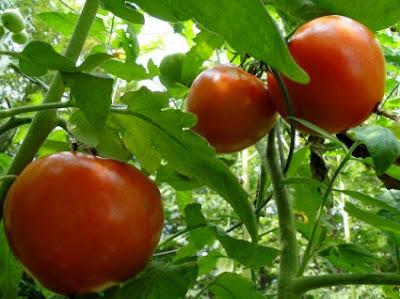 Νόμος για απαγόρευση σπιτικού κήπου