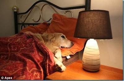 hotéis cães como hospede